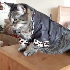 Cat coat costume size small or small dog coat